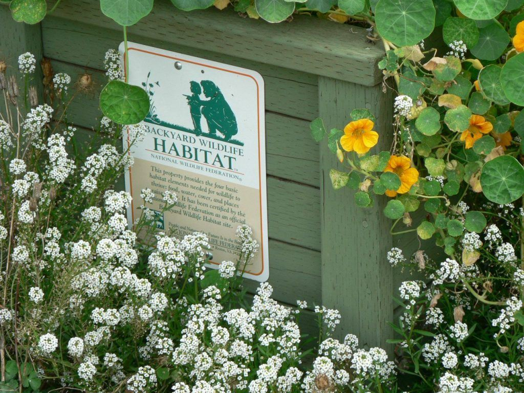Want to Help Wildlife But Don't Have a Ton of Space? How to Create an Animal Haven in Your Yard
