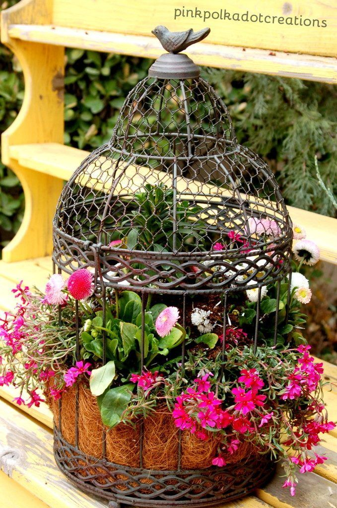 Birdcage planter for backyard