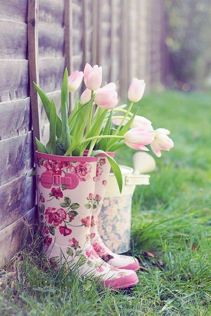 Tulips planted in old rain boots