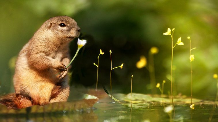squirrel-in-the-water