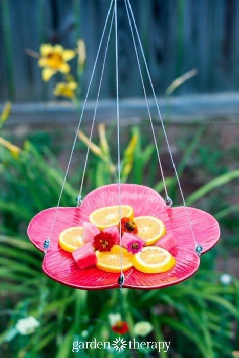 A 'Fruity' Butterfly Feeder