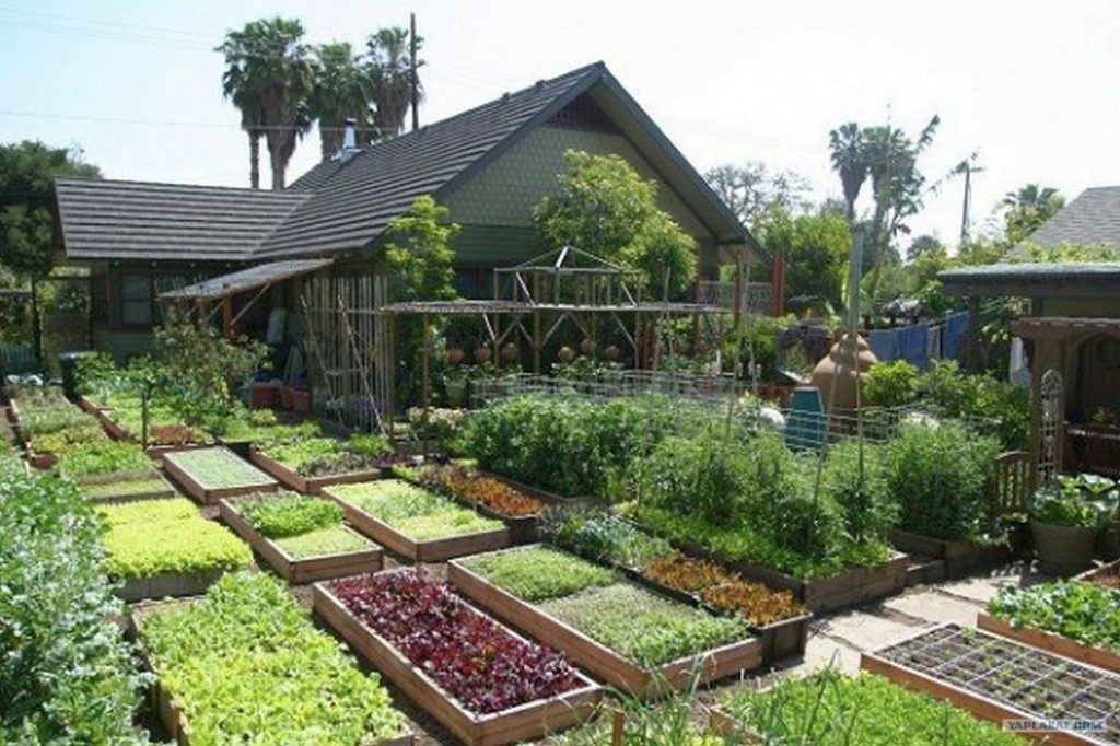 A DIY Farm Guaranteed to Produce 6000+lbs or more with little space!